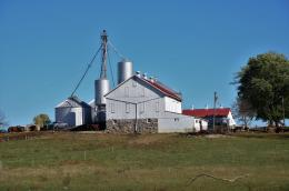 White barns with red roofs on cattle farm.
