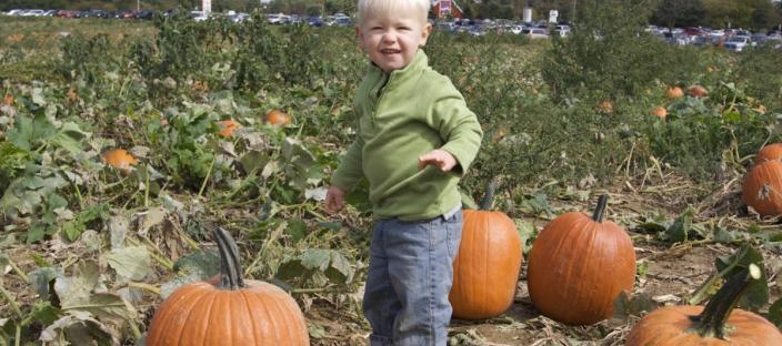 Photo of a boy in a pumpkin patch.