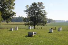 Bee hives in field.