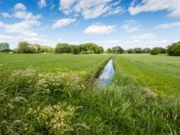 Photo of a green field with an irrigation ditch running through the middle.