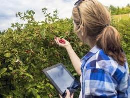 Photo of a woman beside a berry bush holding berries in one hand and an electronic tablet in the other hand.